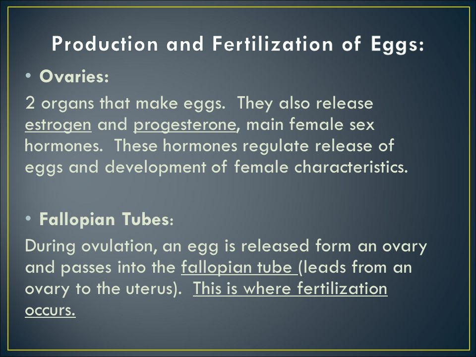 Production and Fertilization of Eggs: