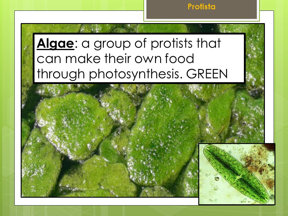Can Euglena Make Food By Photosynthesis