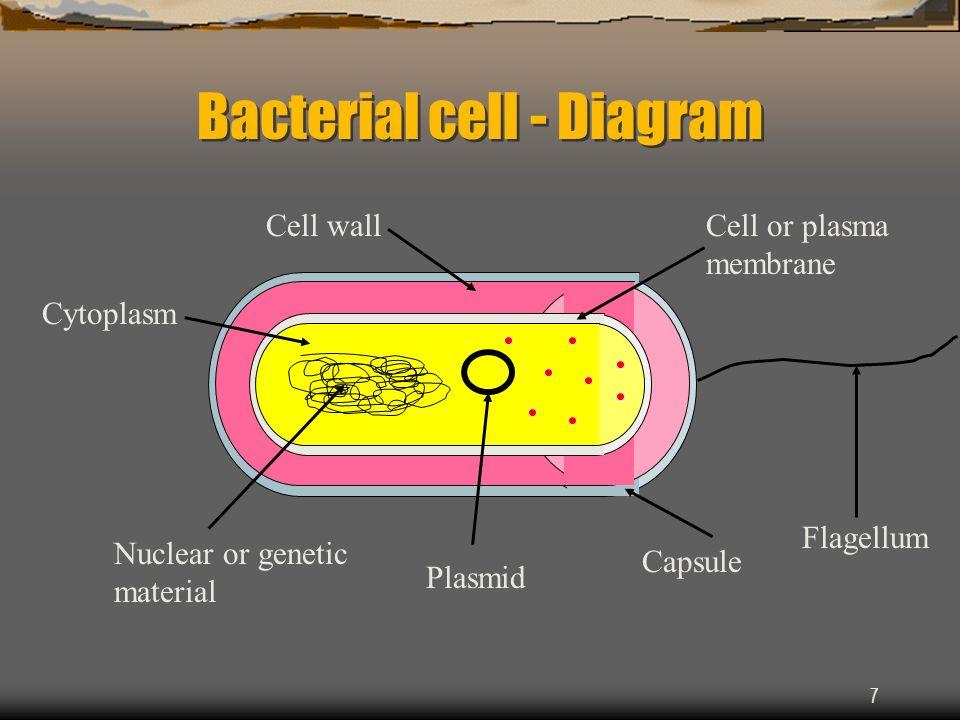 Monera Bacterial Cell Diagram Golfclub