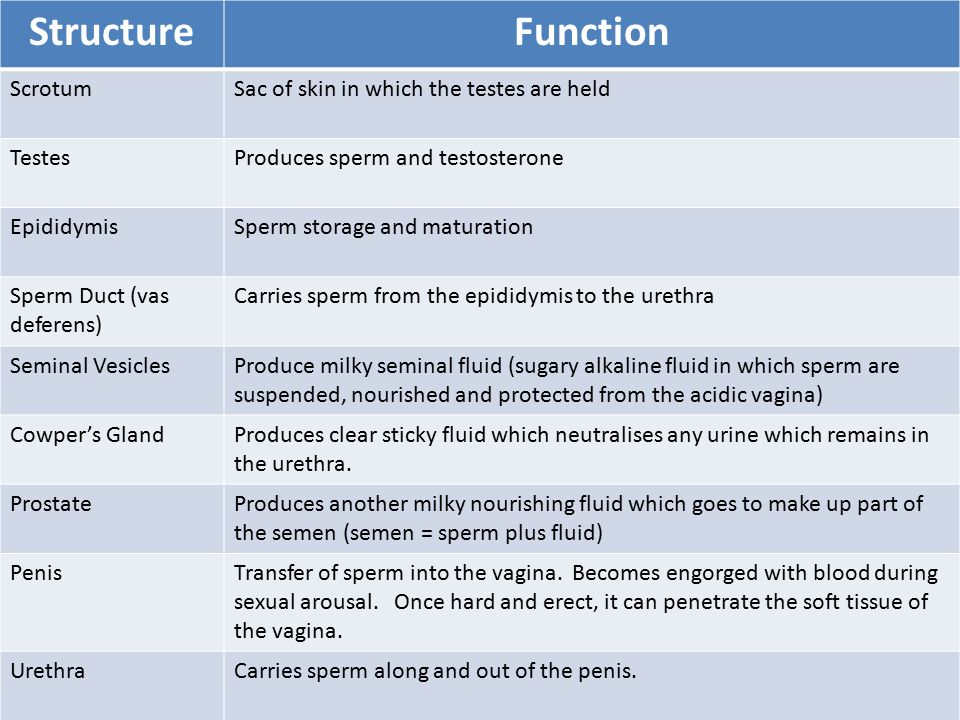 another function of sperm jpg 1152x768