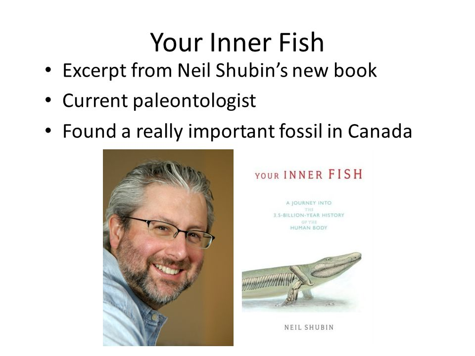 Theory of evolution bio ppt download for Neil shubin your inner fish
