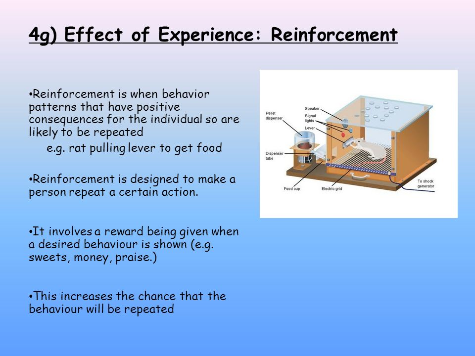effect of reinforcement food as reward Operant conditioning occurs when a dog rolls over on  that follows reinforcement in terms of the law of effect  organism can press or peck to release food or.
