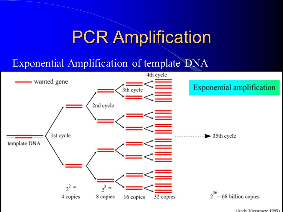 Writing amplification of dna