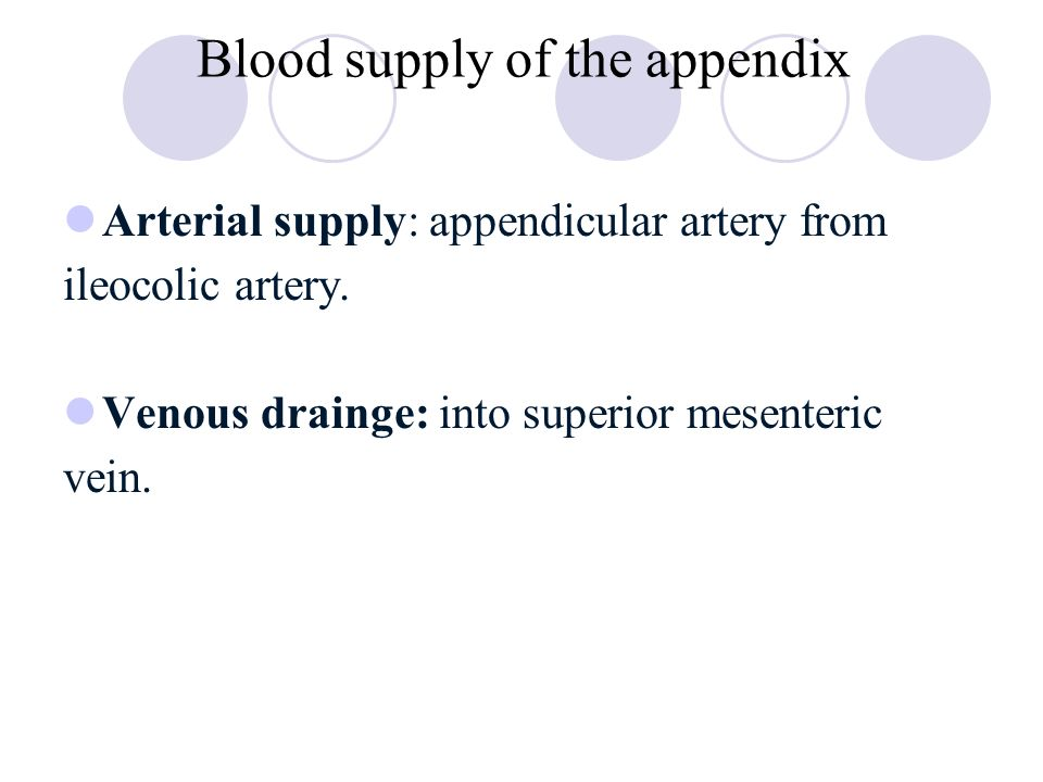 Appendix anatomy blood supply