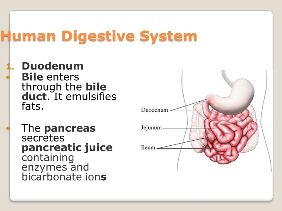 pancreatic juice contains enzymes that help digest The pancreas produces pancreatic juice (which goes to the small intestine to help digestion) and hormones the most common hormone that it produces is insulin insulin regulates the amount of sugar in your blood pancreatic juice contains important enzymes such as lipase, amylase, trypsin, chymotrypsin and carboxypeptidase.