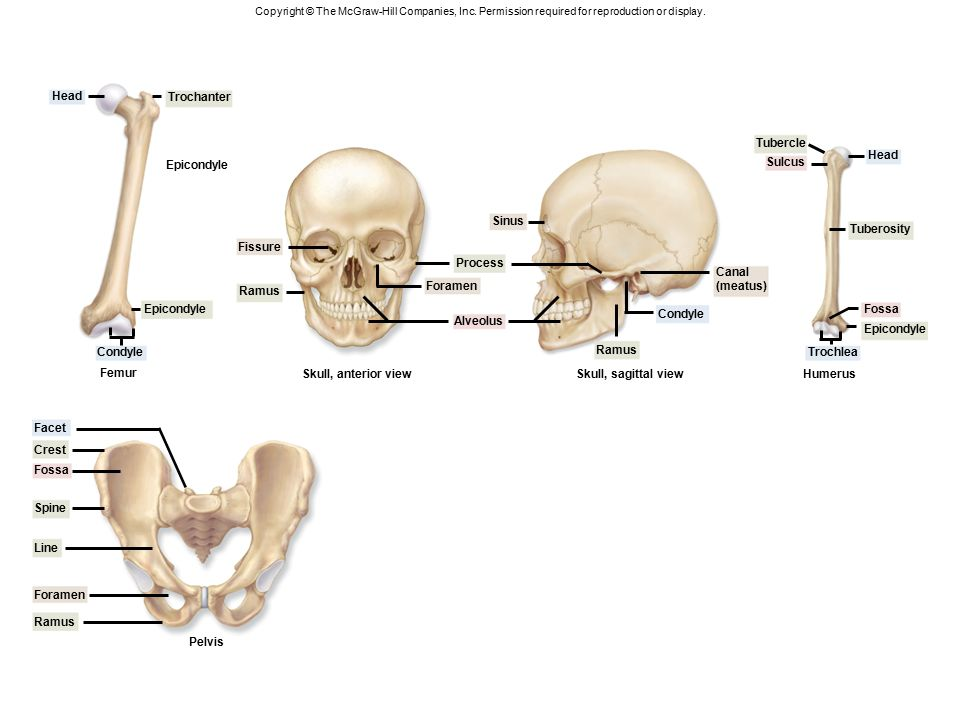 Fantastisch Sinus Anatomie Definition Fotos - Menschliche Anatomie ...