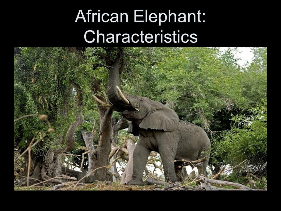 All About Elephants - Physical Characteristics | SeaWorld ...