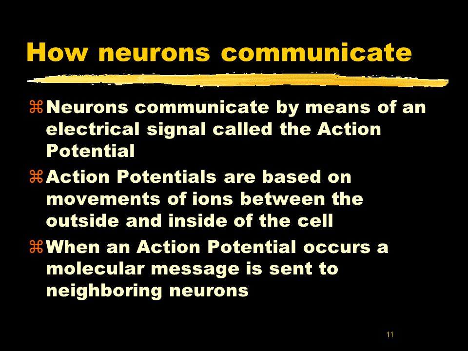 how neurons communicate Home » current health articles » neuron (nerve cell) neuron  for our brain to work, millions of neurons communicate with  how does a neuron work neurons.