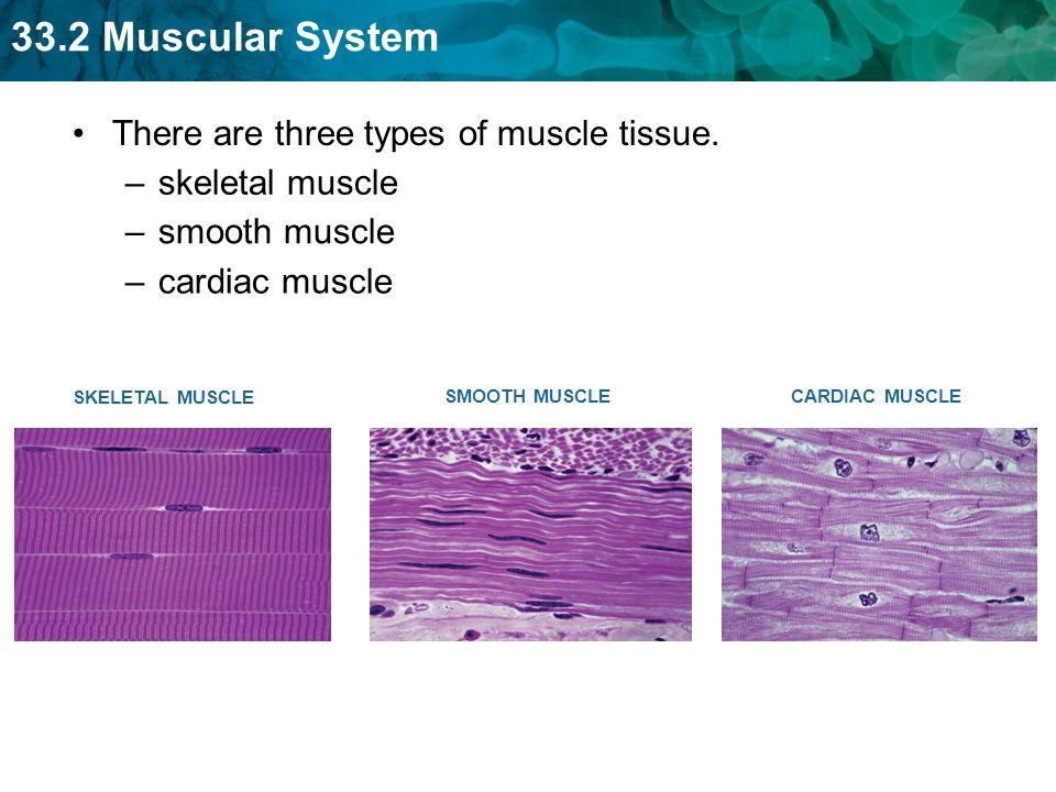 key concept muscles are tissues that can contract, enabling, Muscles