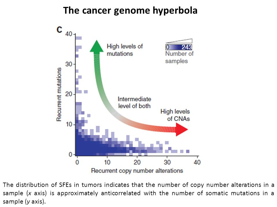 The cancer genome hyperbola