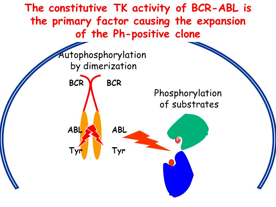The constitutive TK activity of BCR-ABL is
