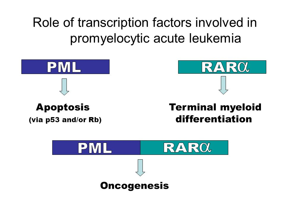 Role of transcription factors involved in promyelocytic acute leukemia