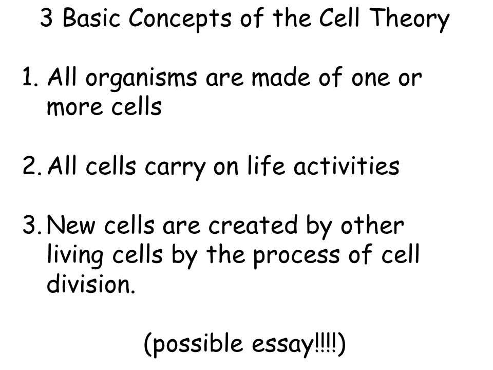 Possible selves theory essay