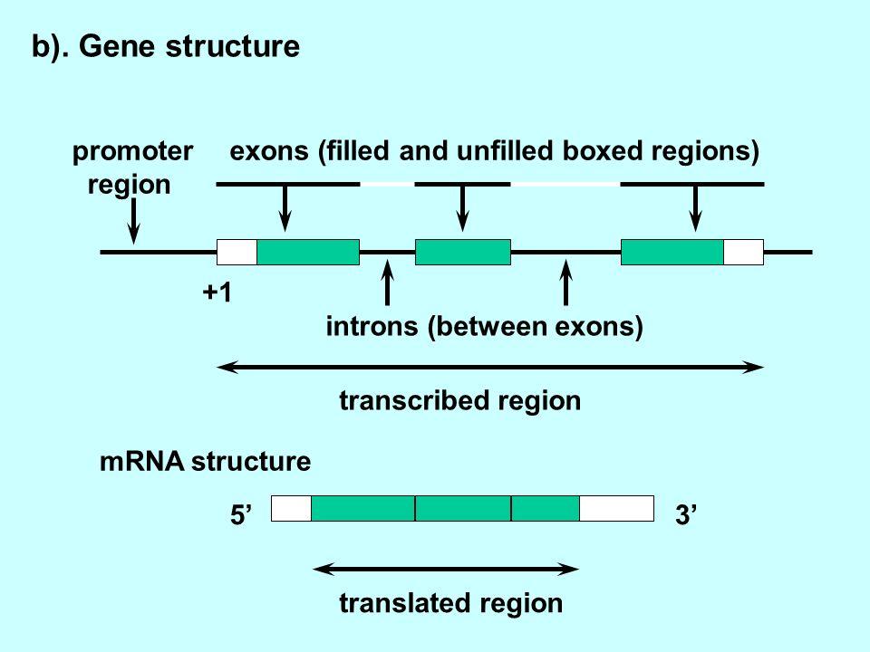 b). Gene structure promoter region