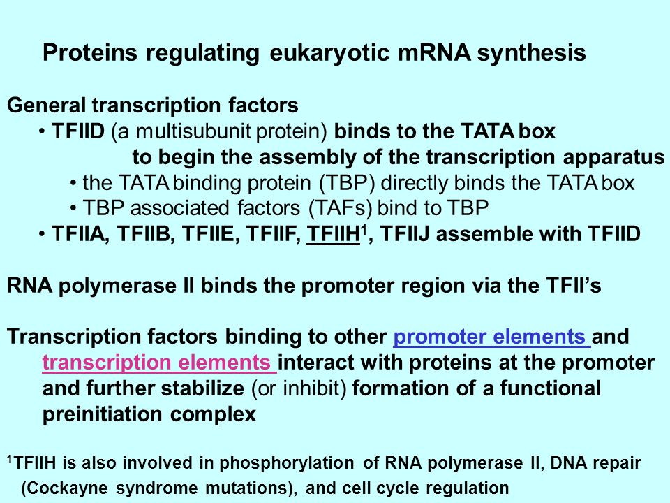 Proteins regulating eukaryotic mRNA synthesis