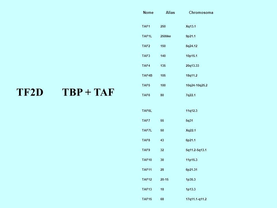 TF2D TBP + TAF Nome Alias Chromosoma TAF1 250 Xq13.1 TAF1L 250like