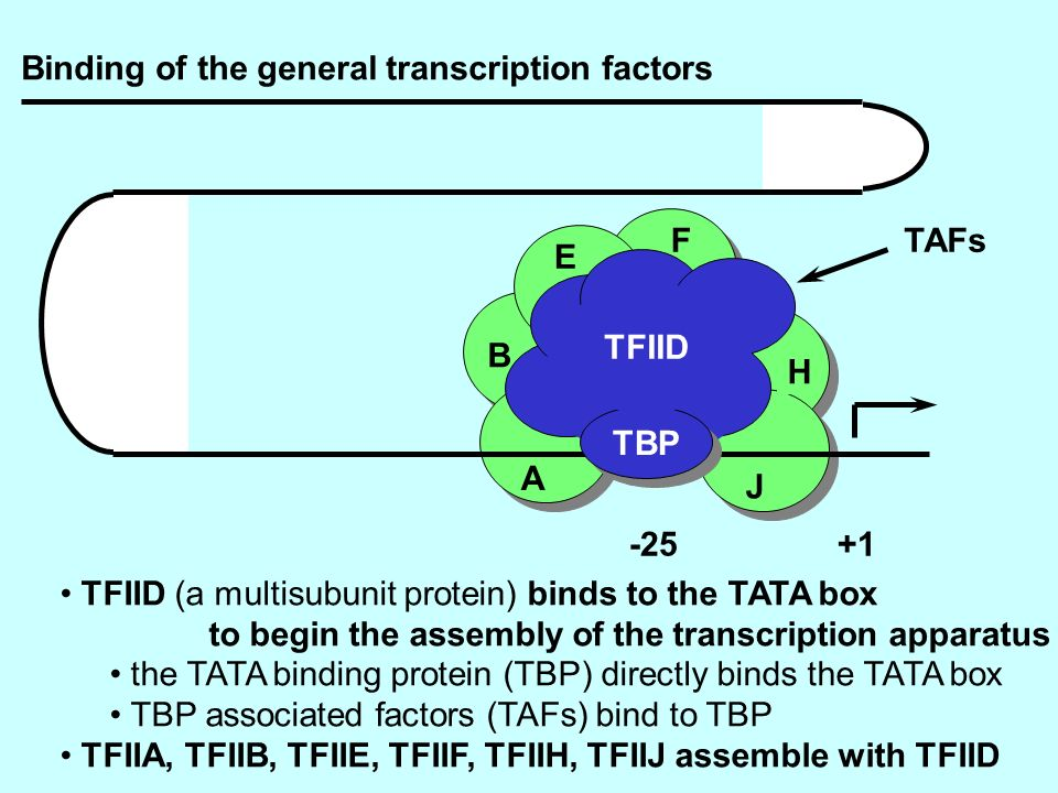 Binding of the general transcription factors