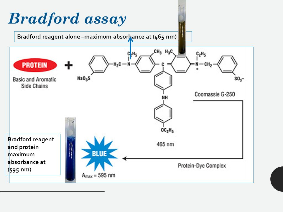 bradford protein assay Protein quantification methods the bradford method, the lowry method and the bicinchoninic acid (bca) method, using bovine serum albumin as protein standard, are widely used to measure protein levels.