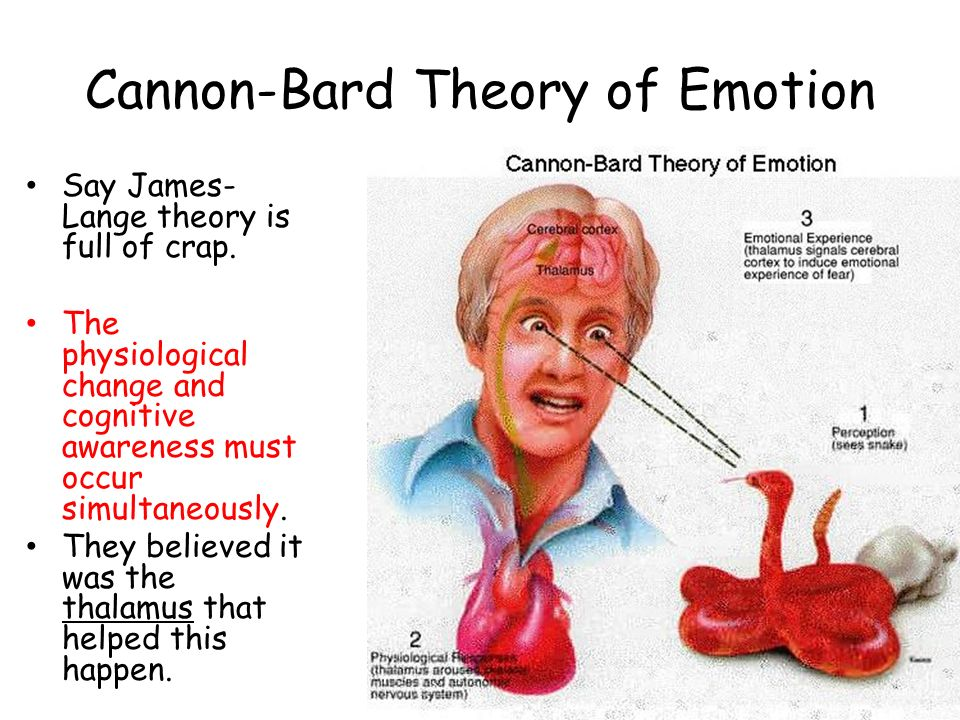 emotions emotion and cannon bard Emotions - practice multiple choice 10 cannon-bard theory b which theory of emotion suggests that emotions are the result of physiological changes in.