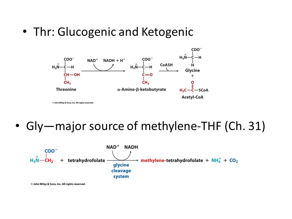 Glucogenic And Ketogenic Amino Acids Ppt | All Articles about Ketogenic Diet