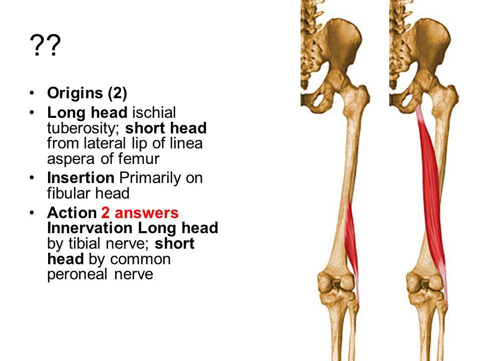 Tuberosity anatomy definition