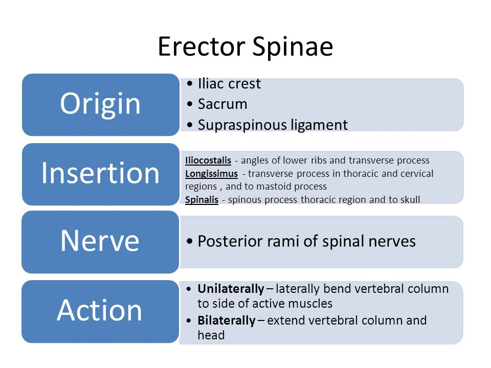 Origin Insertion Nerve Action External Intercostal - ppt ...