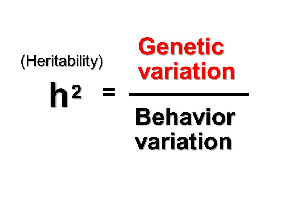 Tryon behavior genetics study Research on human imprinting ...