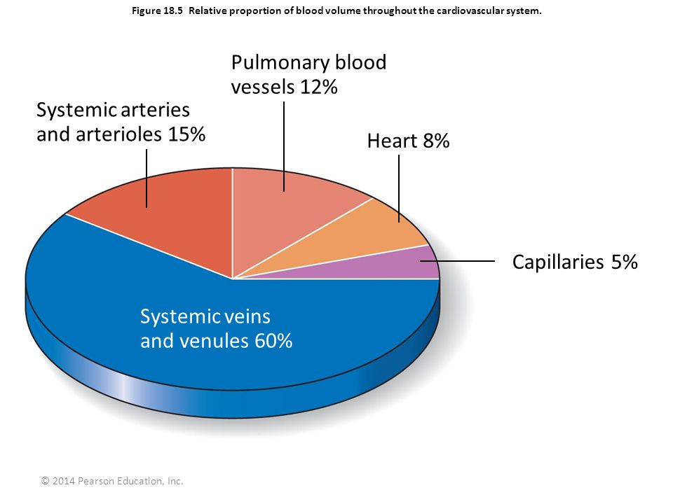 Pulmonary blood vessels 12% Systemic arteries and arterioles 15%