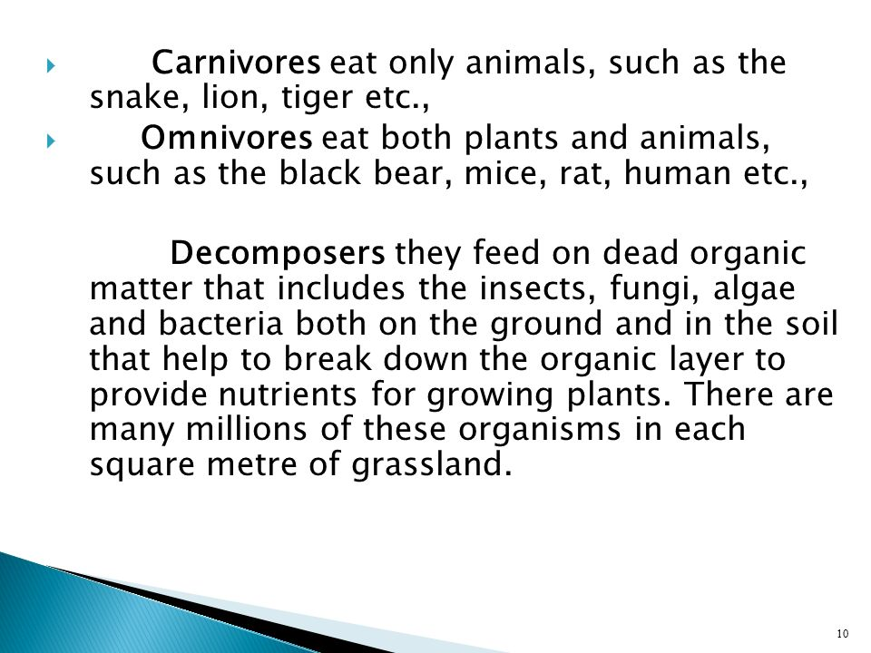 Carnivores eat only animals, such as the snake, lion, tiger etc.,