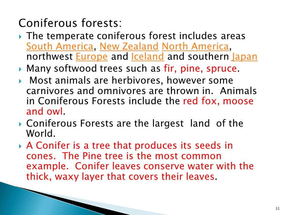 Coniferous forests: