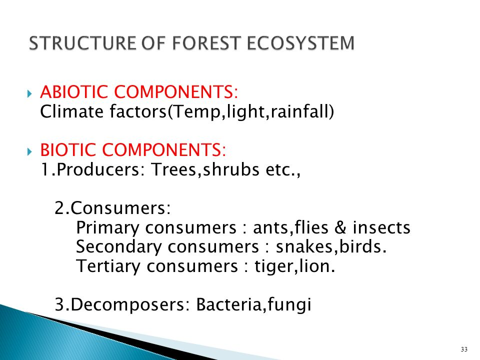 STRUCTURE OF FOREST ECOSYSTEM