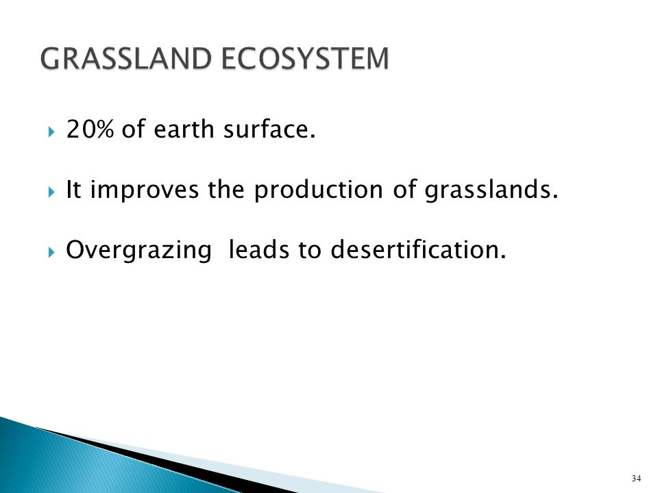 GRASSLAND ECOSYSTEM 20% of earth surface.