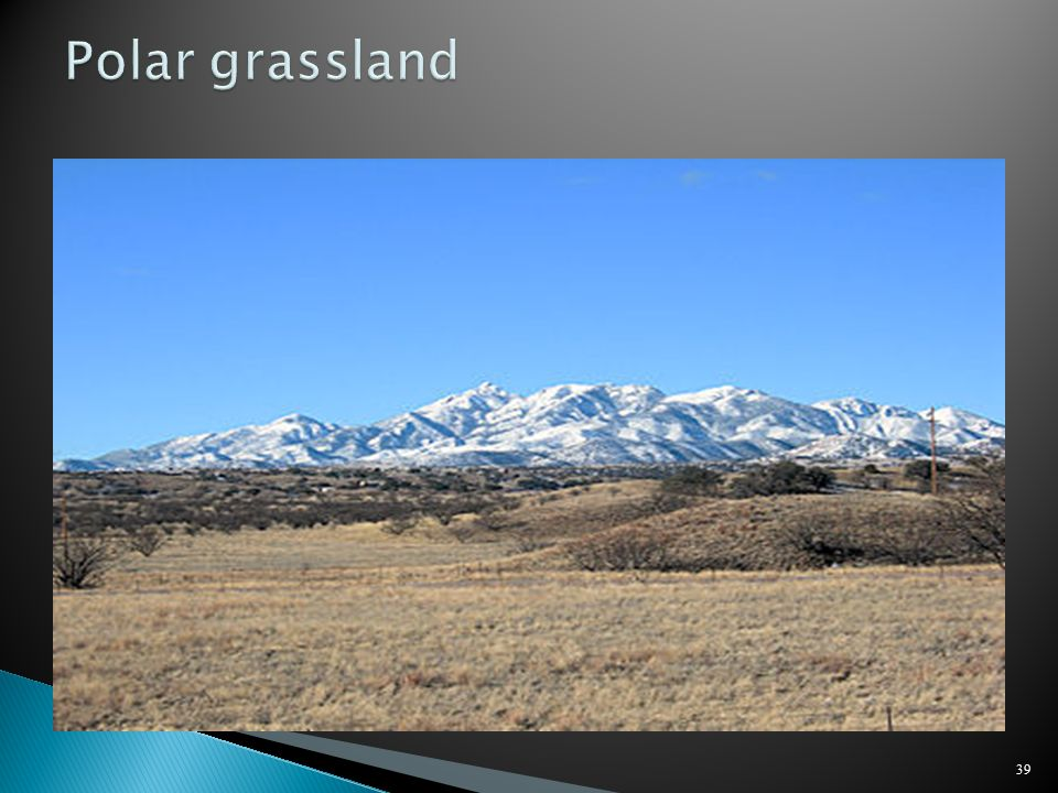 Polar grassland