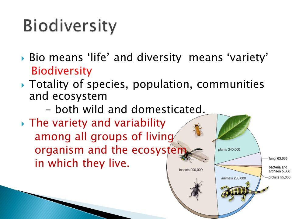 Biodiversity Bio means 'life' and diversity means 'variety'