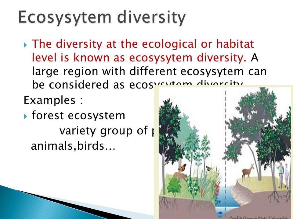 Ecosysytem diversity
