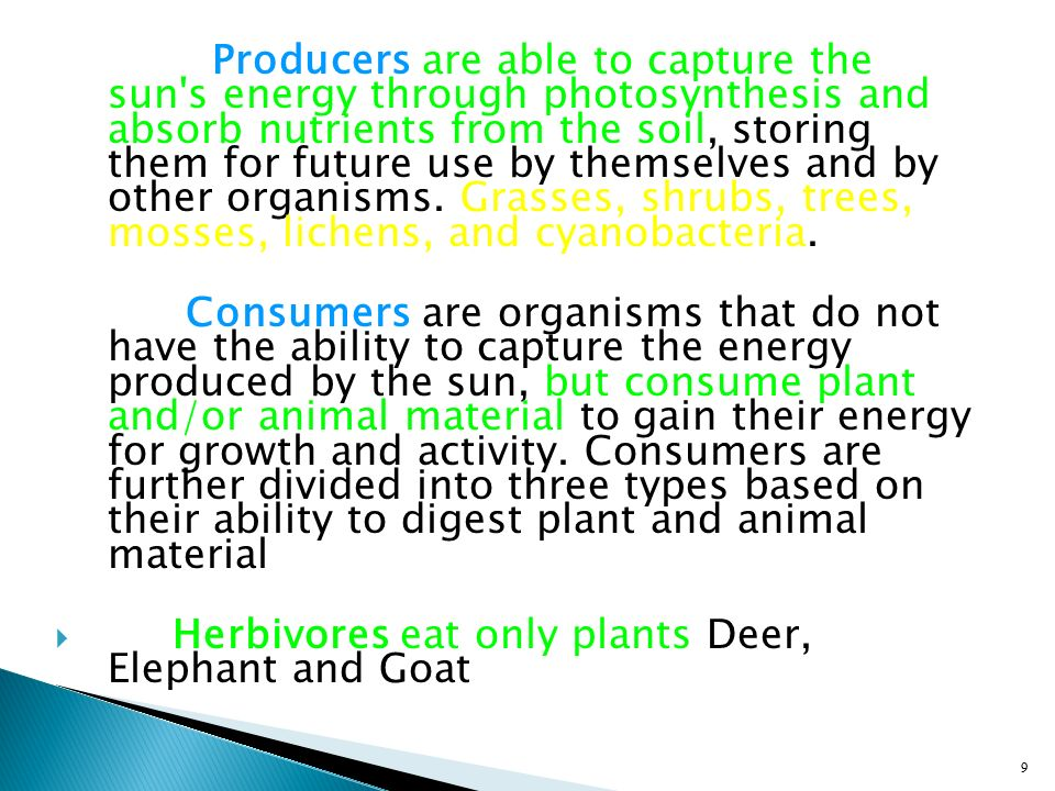 Producers are able to capture the sun s energy through photosynthesis and absorb nutrients from the soil, storing them for future use by themselves and by other organisms. Grasses, shrubs, trees, mosses, lichens, and cyanobacteria.