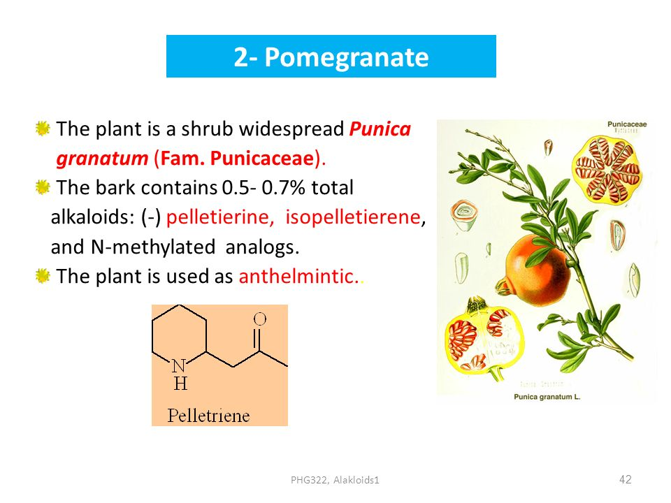 2- Pomegranate The plant is a shrub widespread Punica