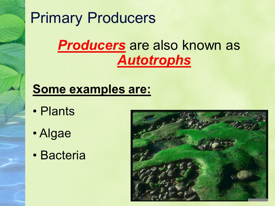 Autotrophs Examples 51514 Movieweb