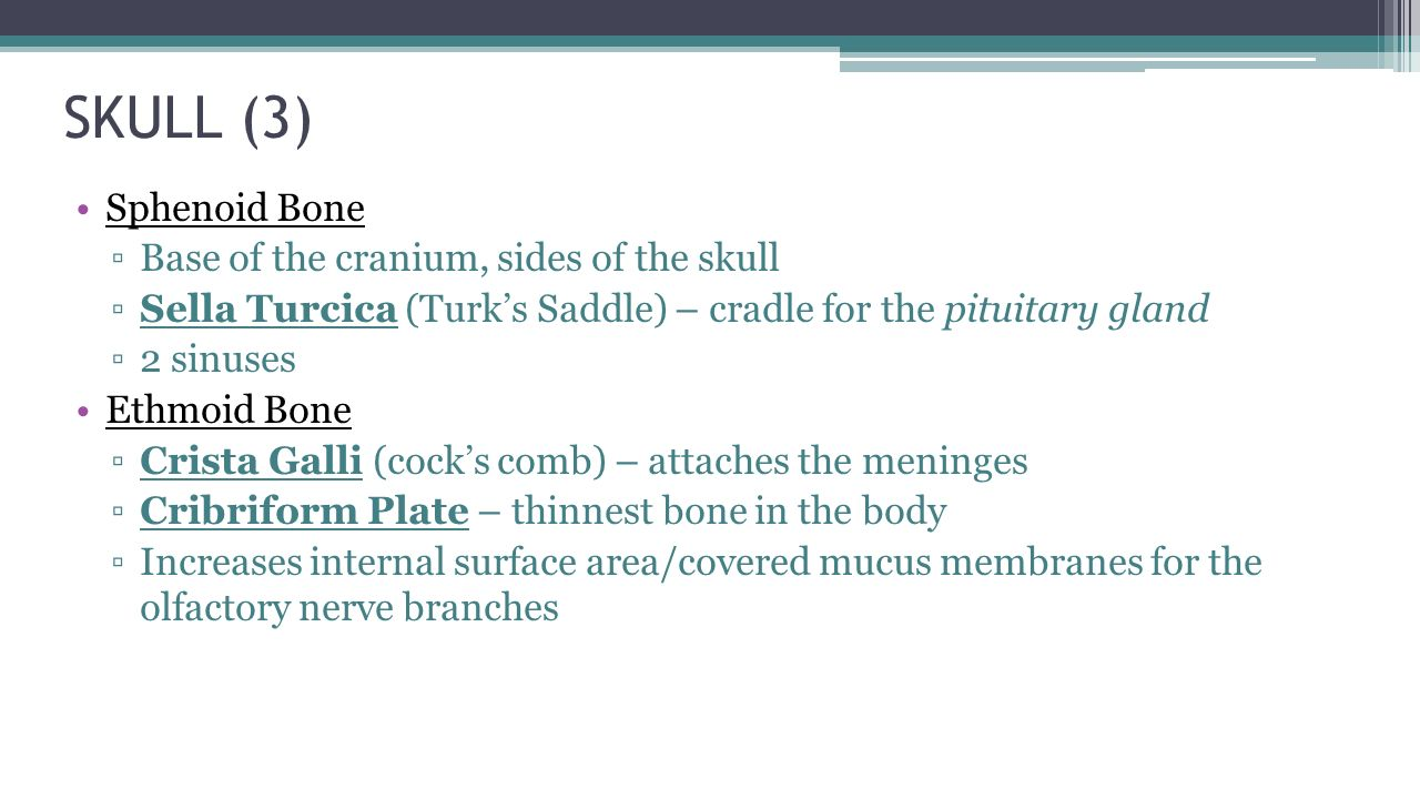 skeletal system chapter ppt download, Human Body