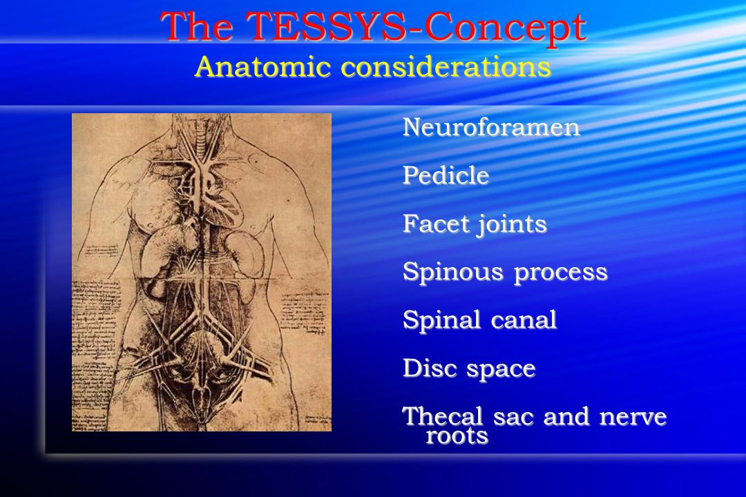 The TESSYS-Concept Anatomic considerations Neuroforamen Pedicle