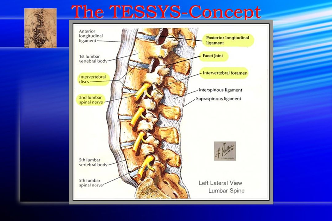 The TESSYS-Concept Anatomic considerations