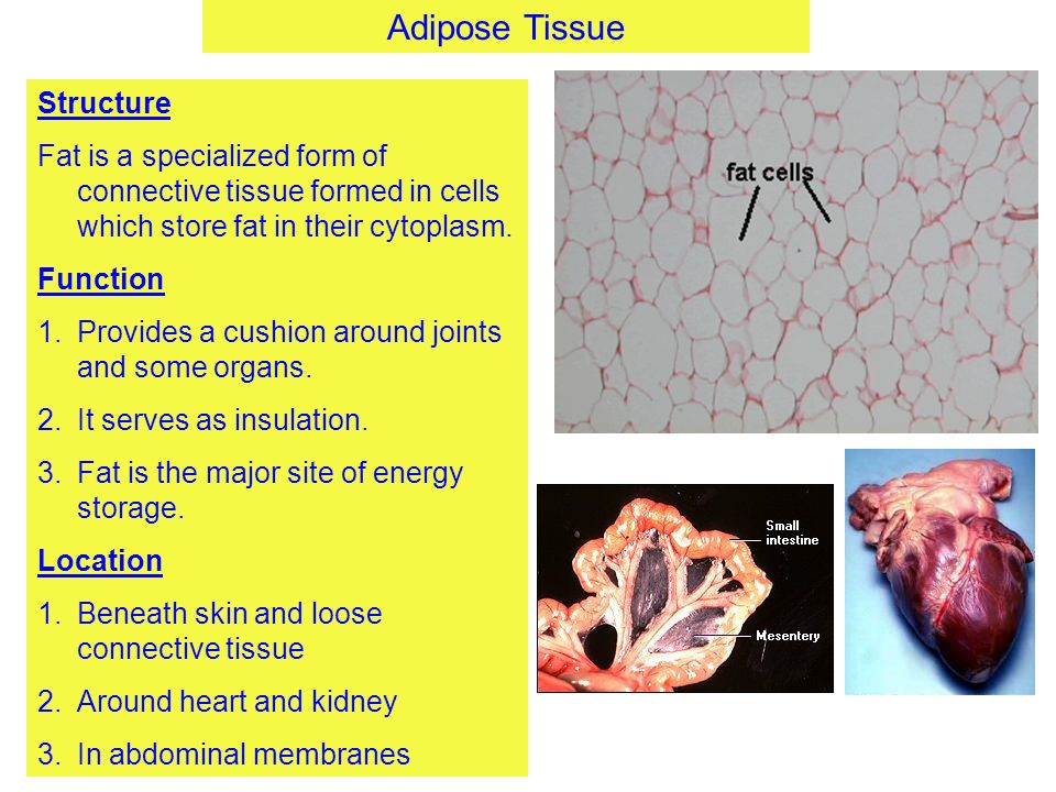 Connective Tissue Structure - ppt video online download