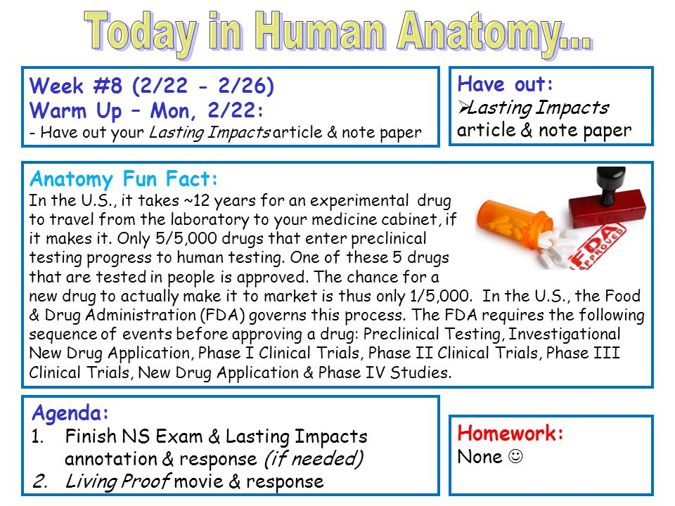 Today In Human Anatomy Week 8 222 226 Have Out Ppt