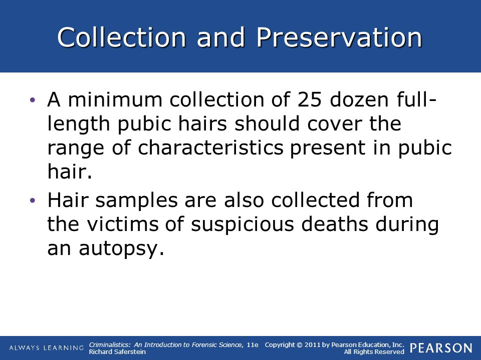 10 Hairs and Fibers. - ppt download