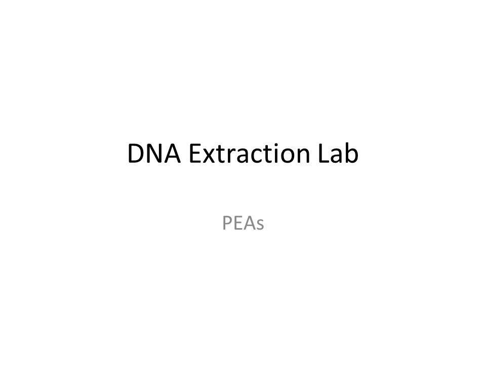 split pea dna extraction lab report