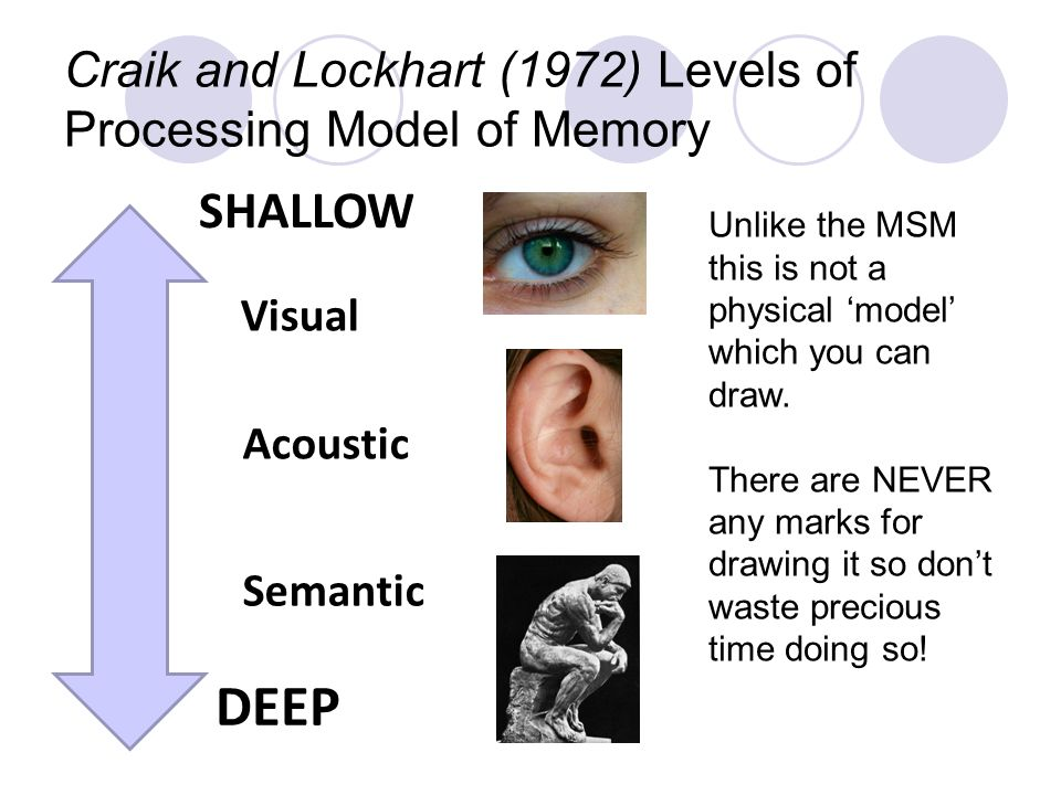 dzx222 reports levels of processing theory Practical applications of levels of processing the deeper the level of processing the more likely the word is to we are more likely to remember a theory.