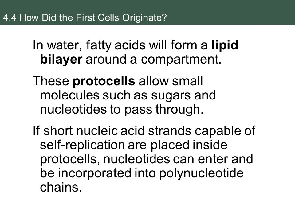 Nucleic Acids and the Origin of Life - ppt video online download