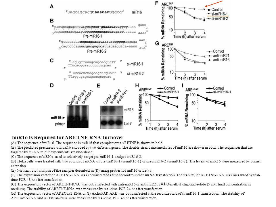 miR16 Is Required for ARETNF-RNA Turnover