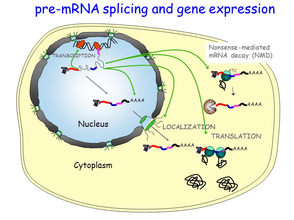 pre-mRNA splicing and gene expression