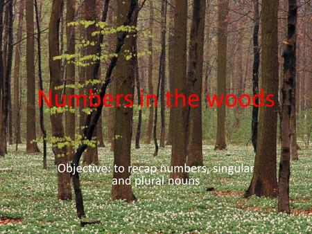 Numbers in the woods Objective: to recap numbers, singular and plural nouns.